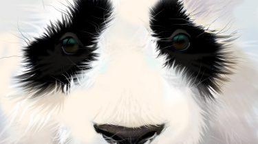 Panda Update 4.0